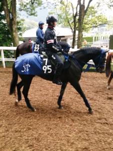 昨日は雨だったのでお馬さんもカッパを着てます