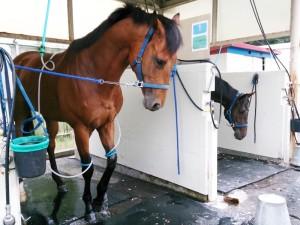 馬体の大きさはくま以上!?