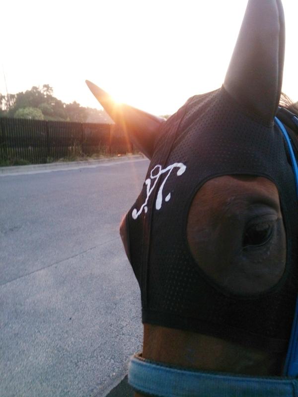 朝日をバックに運動中のアルレちゃん
