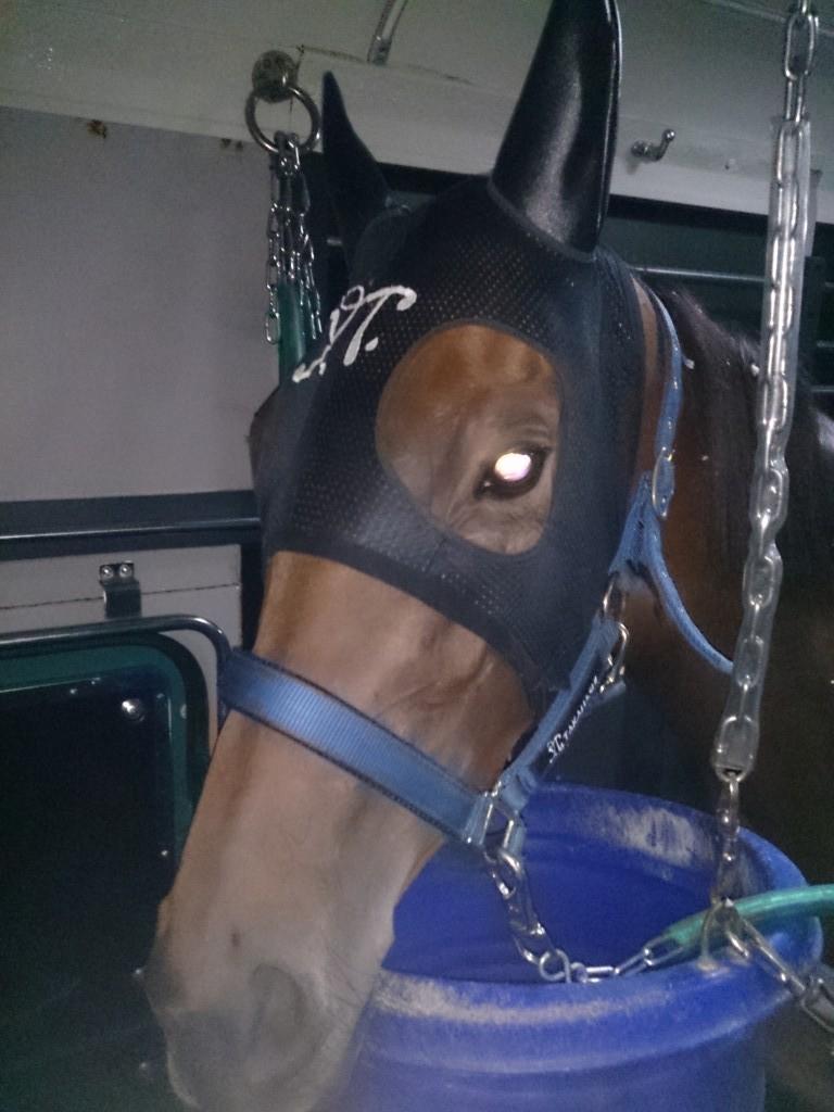 ファシネートさんは来週の競馬に備えて小倉滞在です