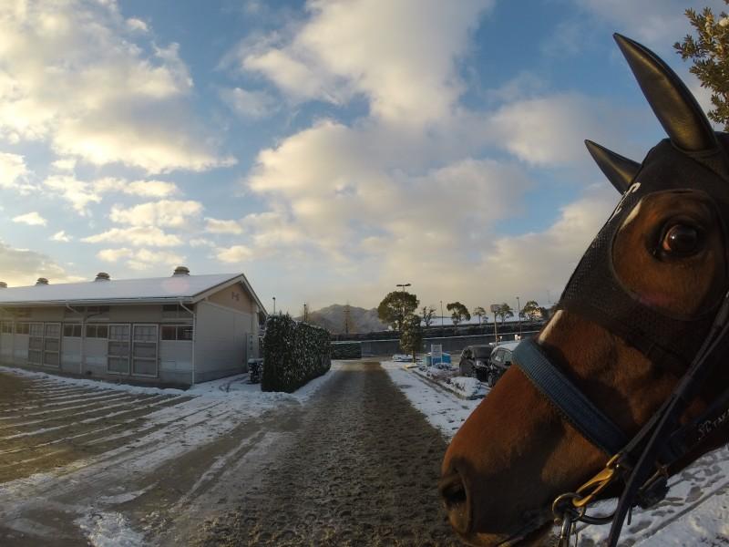 土曜日の朝は栗東も少し雪が積もりました。(驚くメイショウナンバーちゃん)