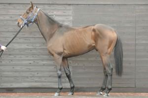 馬体のコンディション