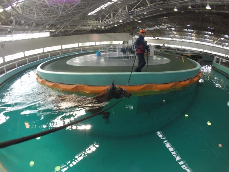 エッジースタイルちゃんはプールで調整されております。