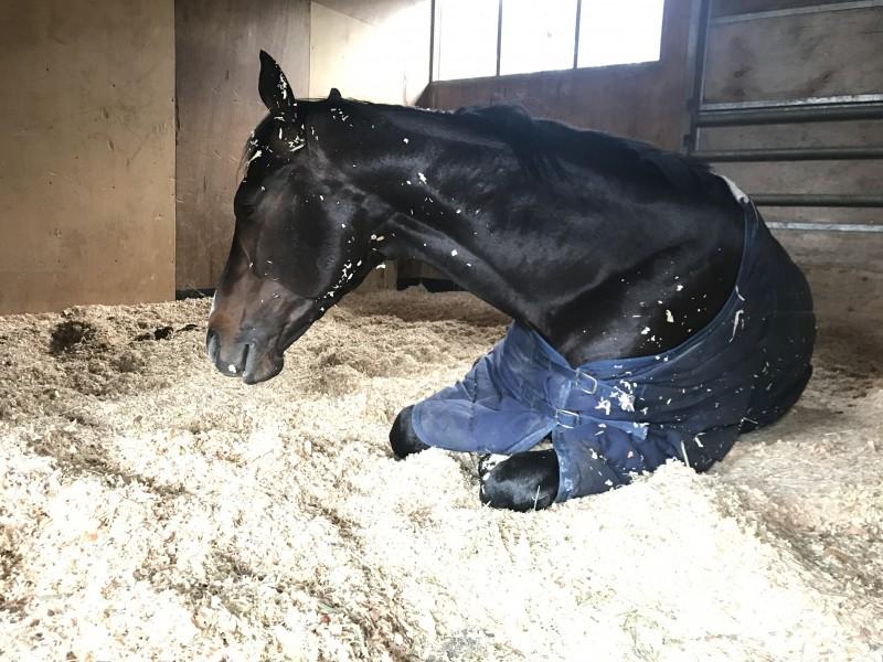 マコトタリスマンは今週3度目の正直で新馬戦へ投票。さすがに除外はないと思いますがどうでしょうか(^^;)