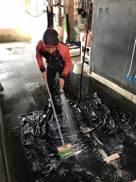 こちらは馬服を洗う佐藤助手