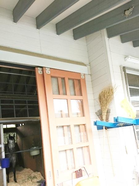 厩舎の軒下にツバメの巣が出来ています