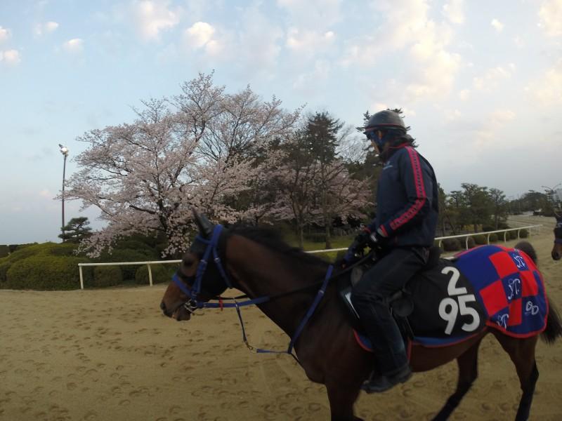 桜をバックにヤマトノオー君
