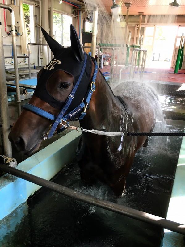 ラスエモーショネスちゃんは函館の温泉で疲労をとっていました