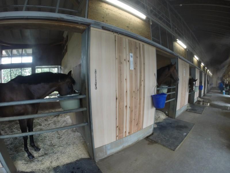 馬房の壁が綺麗になりました