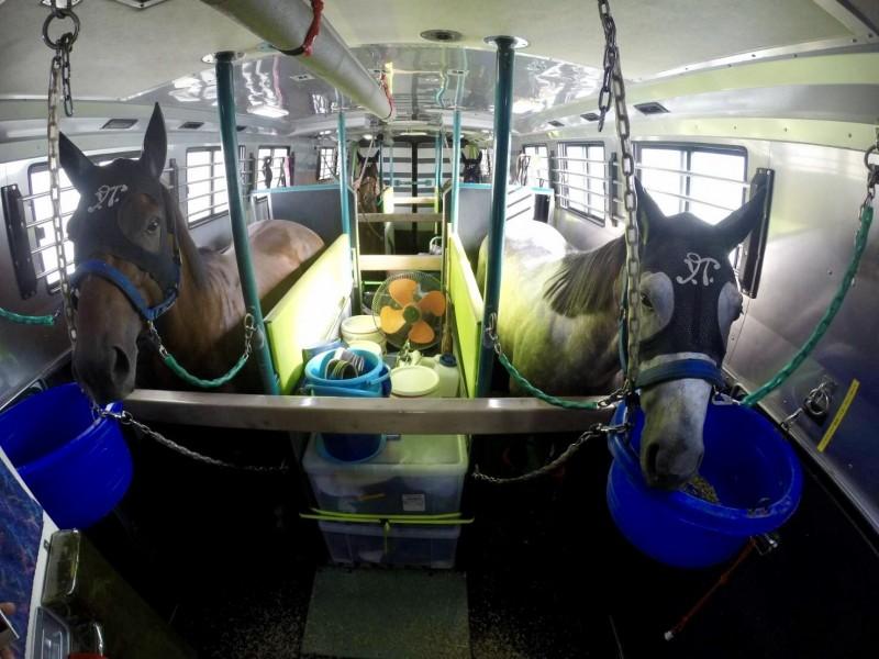 小倉へ向かう馬運車にて。ハルク(左)とプラチナバイオ(右)