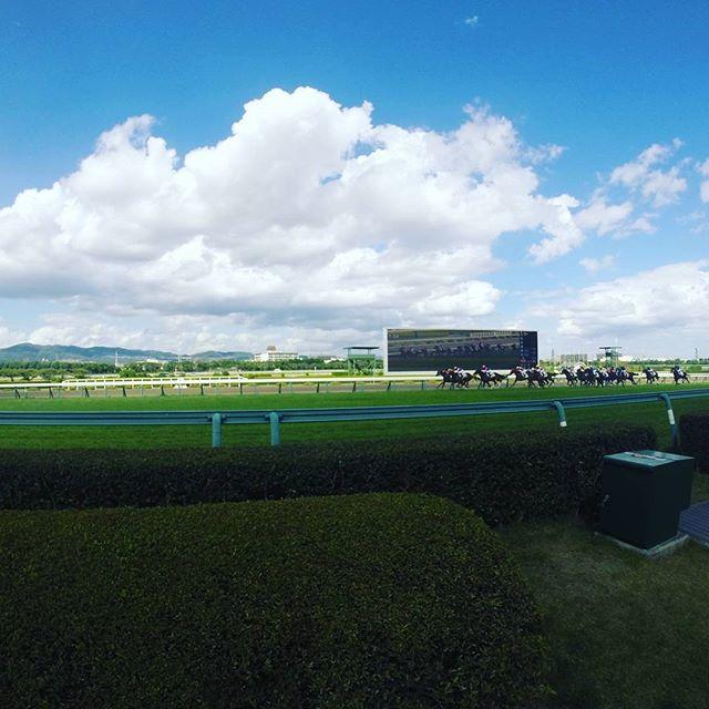 阪神競馬場の最後直線