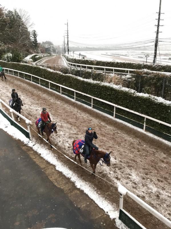 水曜日は栗東にも雪が降りました