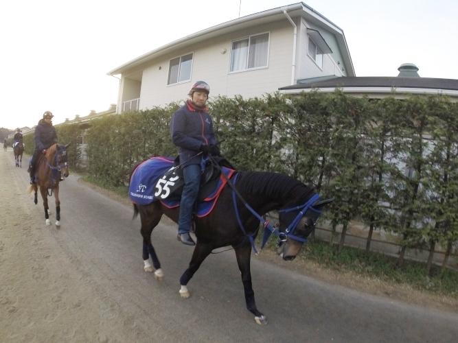 厩舎周りを運動するキューピッドアローちゃんと佐藤助手