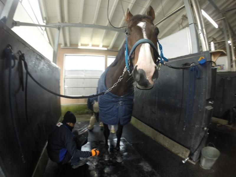 8歳馬となったアイアン君堂々といています。