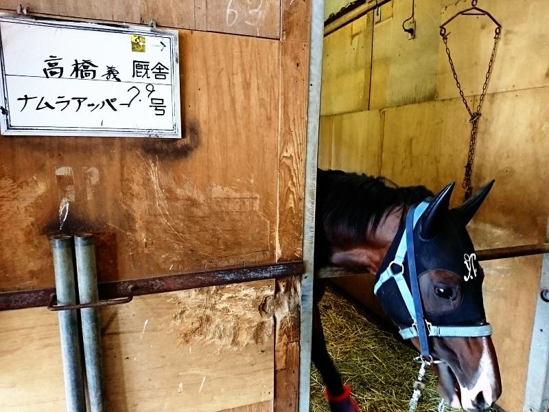 福島厩舎解散に伴い転厩してきました