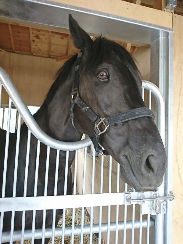 ひとまず乗馬苑に移ったクリノスターオー君