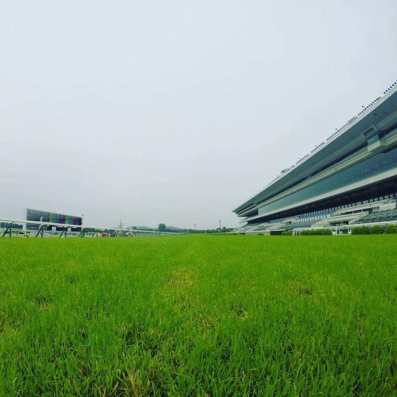 芝が青い京都競馬場