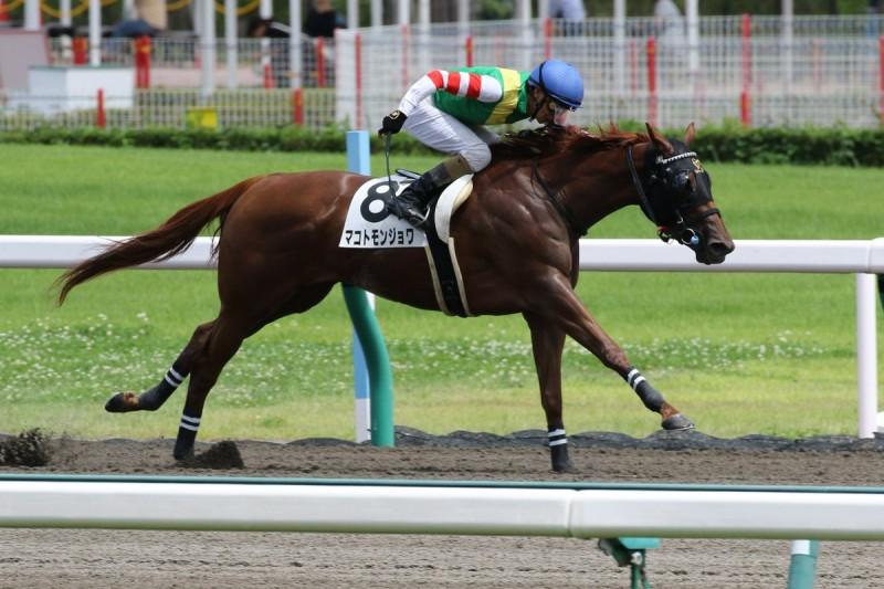 強い競馬で勝利したモンジョワちゃん