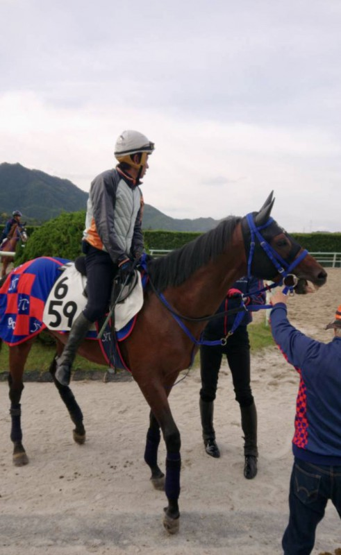 来週の競馬に向けて、和田ジョッキーを背に一週前追い切りを終えたクリノヤマトノオー