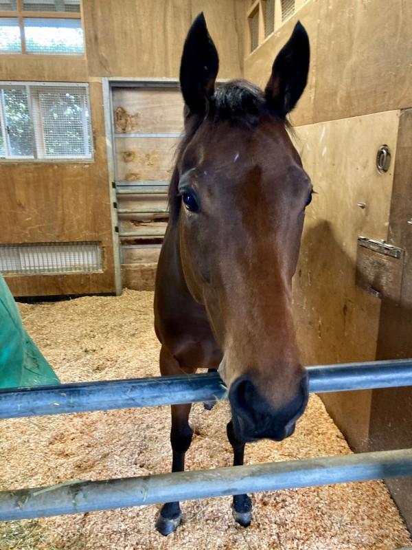 今週入厩していたペトログリフ。かわいい女の子♀