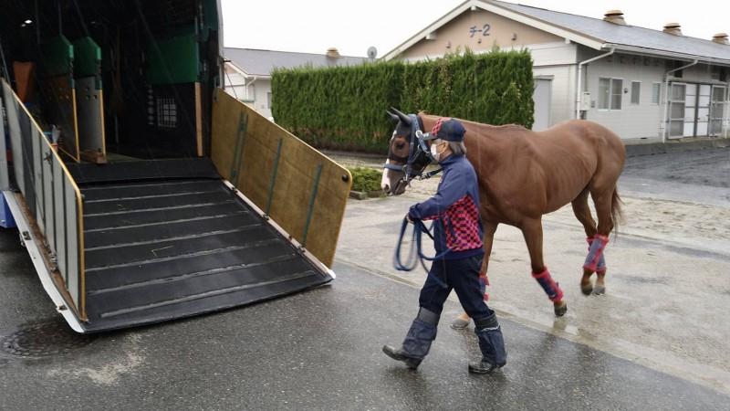 東京への馬運車に乗るスリーグランド